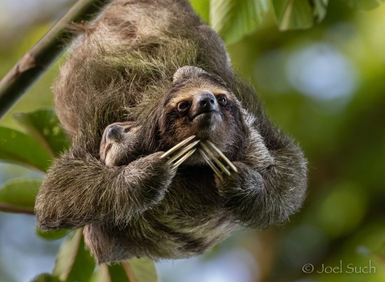Such_Sloth